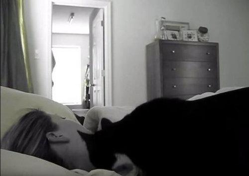 起こしてくれる猫03