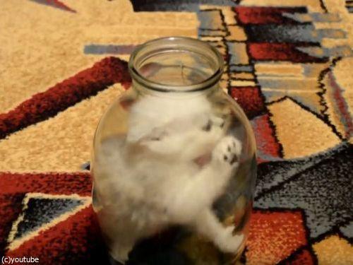 ビンの中の子猫04