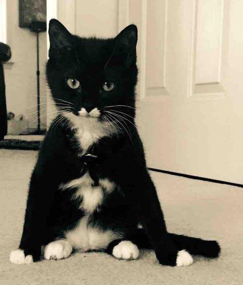 うちの猫…座り方がおかしいんだよ06