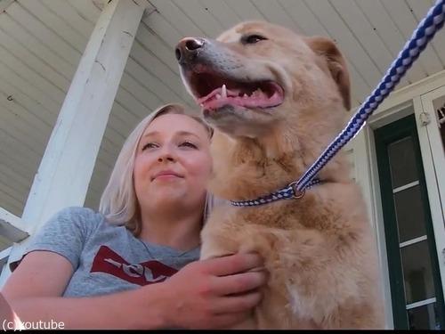 行方不明の犬、100km離れた前の家にいた02
