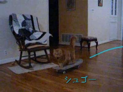 スケボーを楽しむ猫