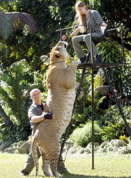 実在した巨大生物・ライガー