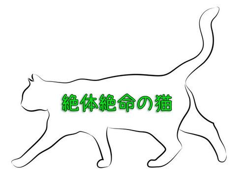 猫のフォトショップバトル00