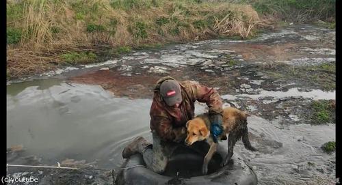 沼地にハマって動けない犬を救出05