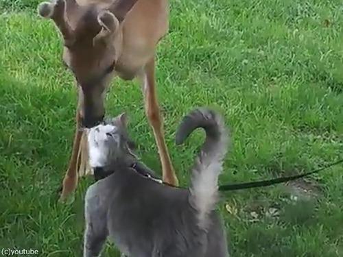 鹿と猫とのアツアツっぷり00