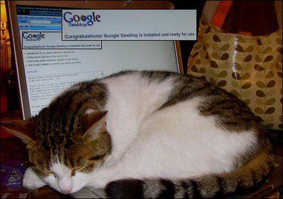 パソコンの上の猫02