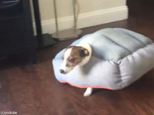 「昼寝をしていた愛犬が別のものに進化」01