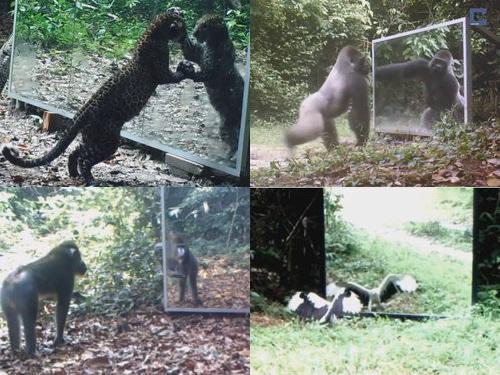 野生動物と鏡00