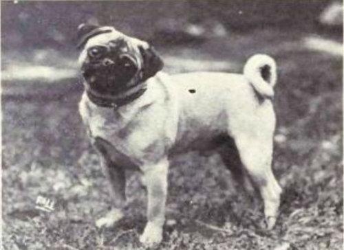 犬種は100年でこう変わった09