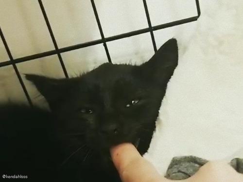 お怒りの子猫、指をくわえるとおとなしくなる00
