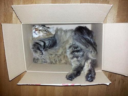 箱入り猫15