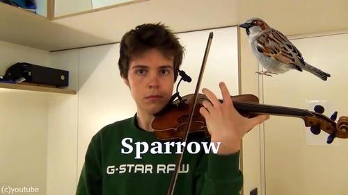 ヴァイオリニストが動物の鳴き声を演奏する07