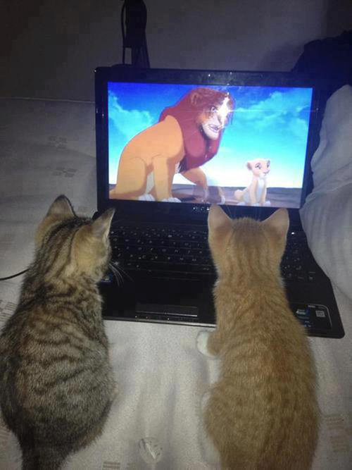 密談する猫たち08