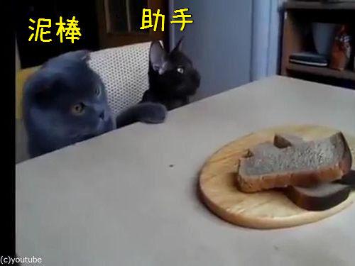「泥棒猫2匹が私のパンを盗むとき」00