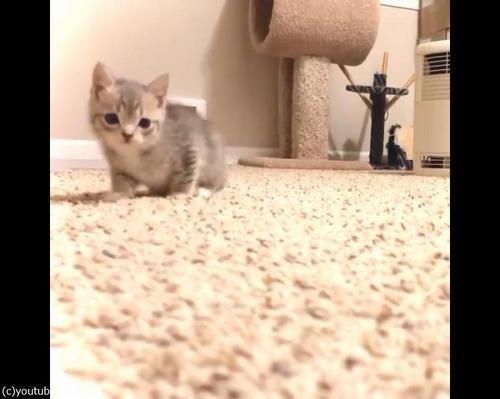 カメラにおそるおそる近づく子猫03