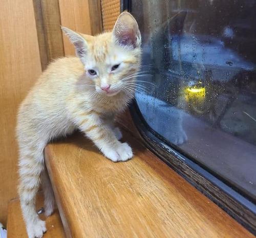 メキシコ湾で溺れていた子猫を救出04