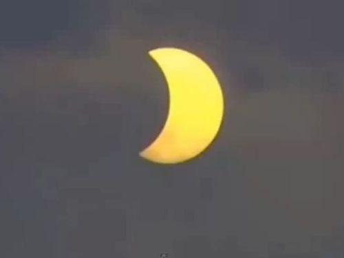 日食とニワトリ00
