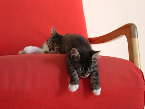どこでも寝る猫たち00