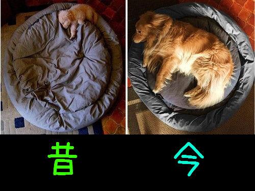 犬の成長00