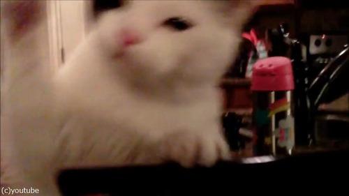 ドローンで猫撮ってみた01
