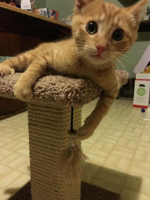 近所の猫が骨折した子猫を連れてきた07