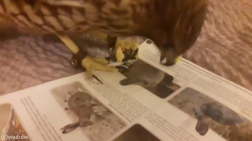 ペットに雑誌をあたえてみた02