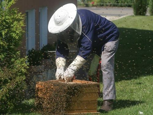 養蜂家になりたて00