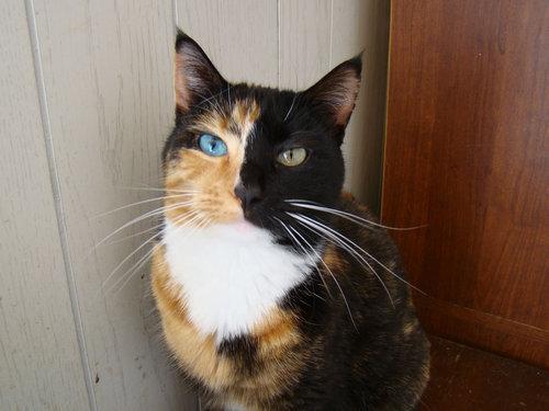 二つの顔を持つ猫09