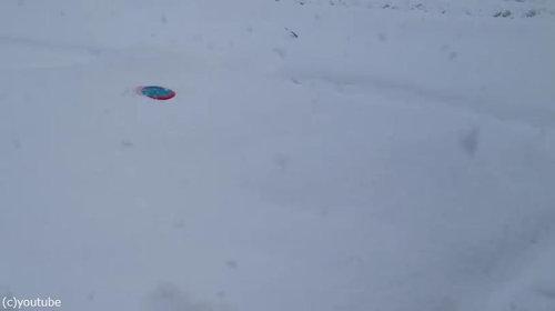 コーギーの雪遊び01
