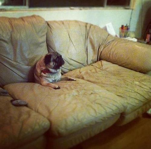 犬や猫の家具の使い方02
