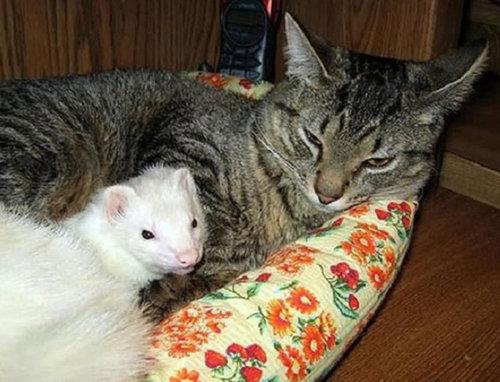 他の動物と仲良くする猫07