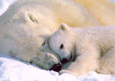 親子愛であふれる動物たち15
