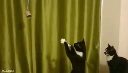 魔法を使いたい猫08