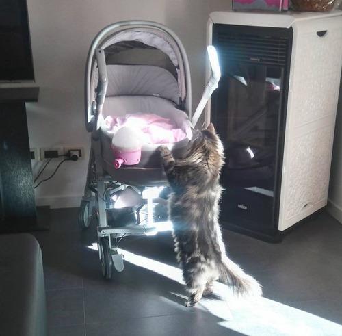 女の子を守る猫02