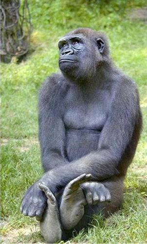 007考える、物思いにふける動物たち