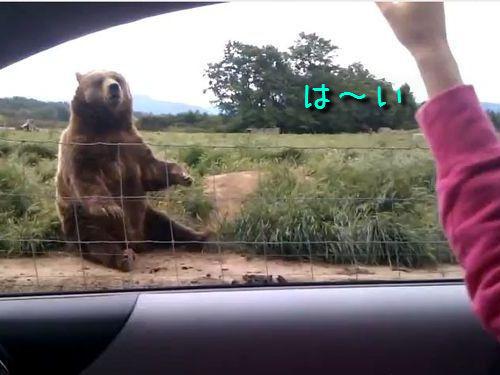 手を振るクマ