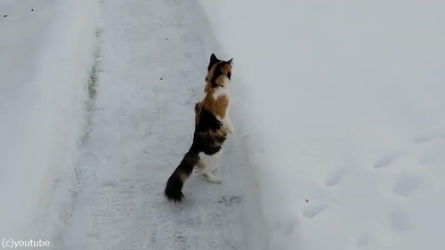 雪景色を見たうちの猫は01