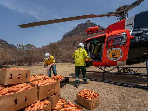 オーストラリア森林火災で動物たちの食料供給01