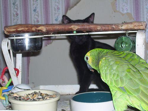 インコと猫10