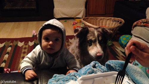 隣の犬「ママー」赤ちゃん「えっ」02