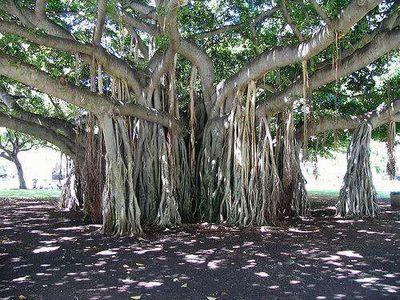 世界の奇妙な木16
