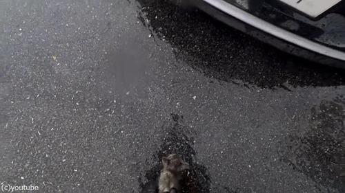 男性が路上でバイクを停めた理由03