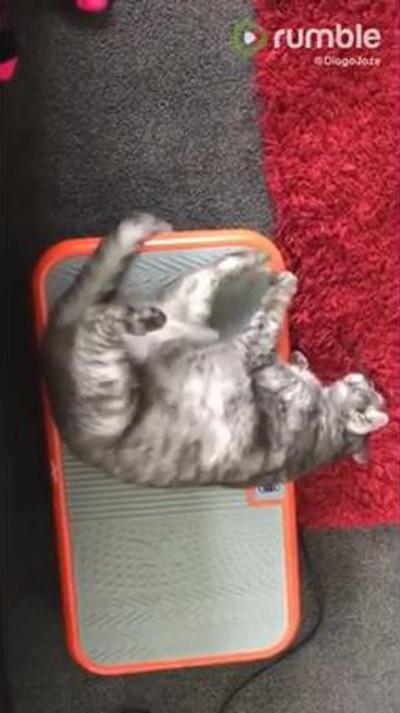 ダイエット器具でくつろぐ猫さん03