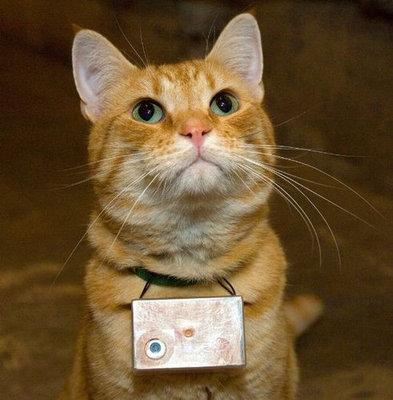 猫の視点01