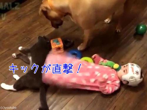 赤ちゃんに蹴られた猫、犬に八つ当たり00