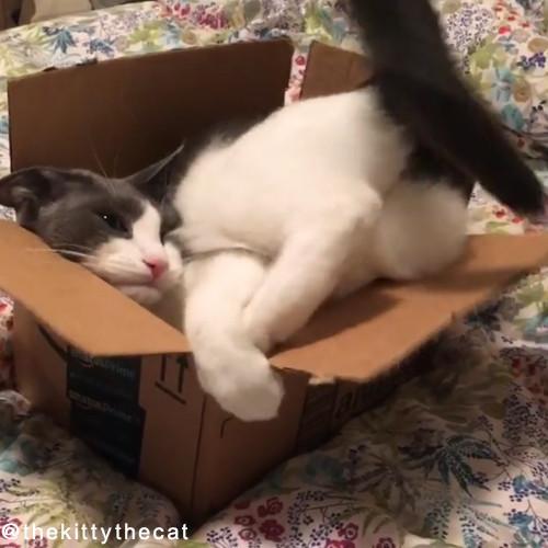 やっぱり猫は箱が好き04