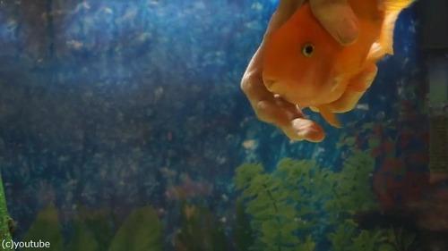 なつっこい魚03