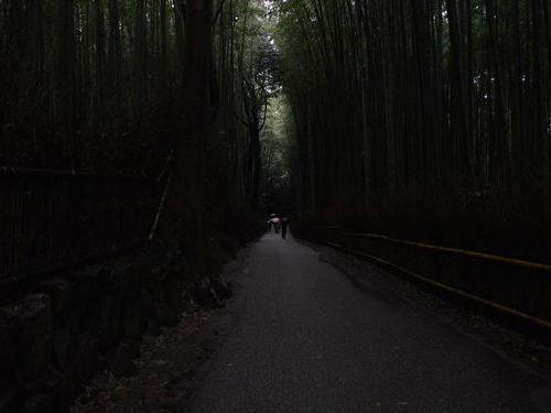 嵐山の竹林03