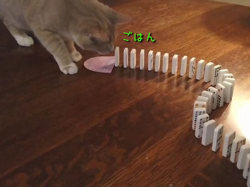 ピタゴラスイッチ猫