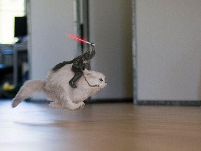 走る猫02